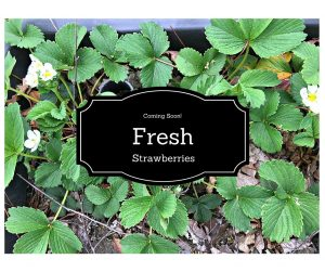Fresh Strawberries www.chathamhillonthelake.com