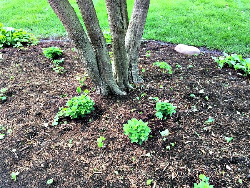 Garden Tour Perennials at www.chthamhillonthelake.com